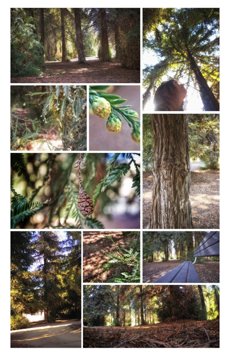 RedwoodPost
